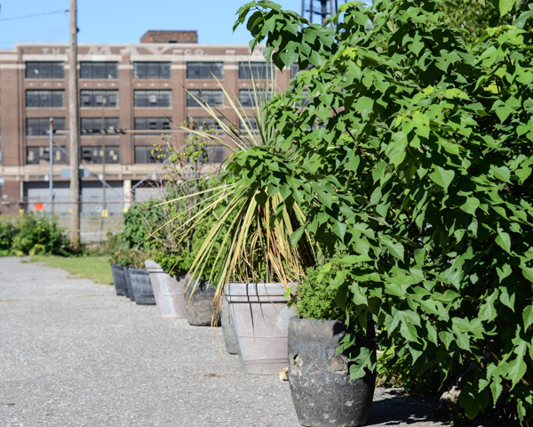 urban paper fiber garden